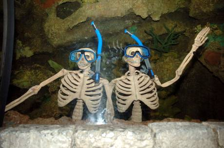 Haunted Reef at the Shark Reef Aquarium