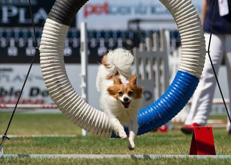 Purina Pure Plan Incredible Dog Challenge