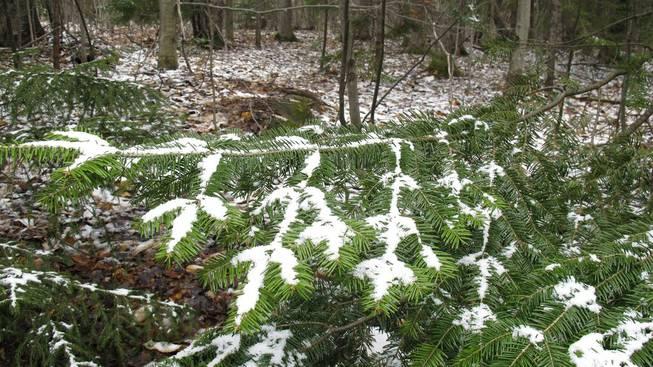 Vermont May Snow