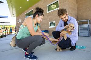 Amelia Bonilla and Bryan Sevilla visit with Abbey, a one-year-old terrier mix, at the Animal Foundation, 655 N. Mojave Rd., Tuesday, June 23, 2020. The shelter is closed to walk-ins due to the coronavirus pandemic but animals can be seen by appointment.