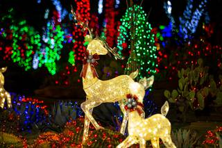 Spots To Visit Holiday Lights Display At Ethel M S Cactus Garden Already Booked Las Vegas Sun Newspaper