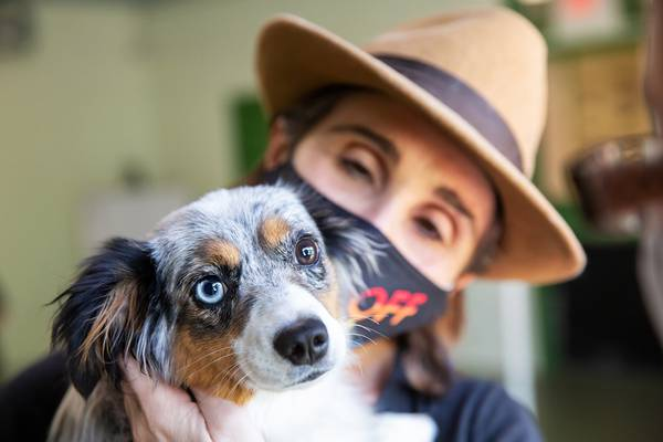 Pet care: How to ease the anxiety of dogs as we return to work