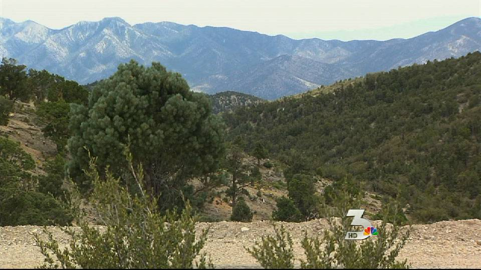 Marijuana field found on Mount Charleston