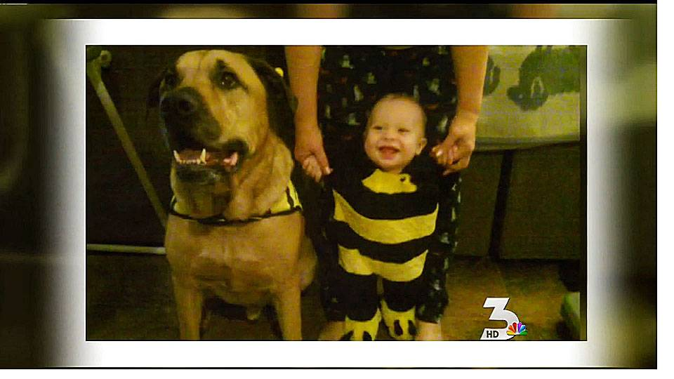 Dog attacks, kills infant